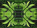 Ferns Abstract